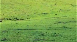 Finca Ganadera o Agricultura | El Seibo